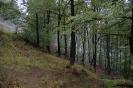 II. őszi gombatúra - Pilisszentlászló